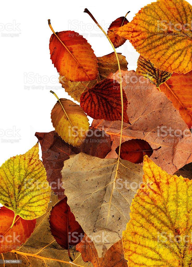 Leaf compostion 1 stock photo