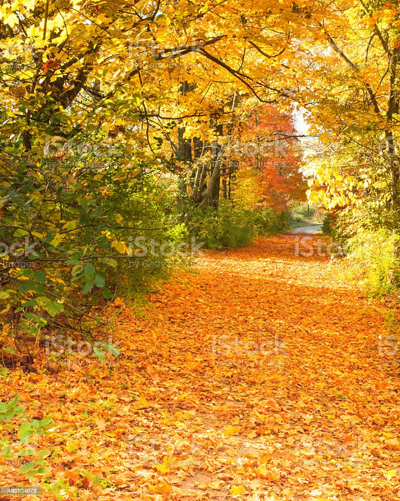 Leaf Covered Path And Canopy stock photo
