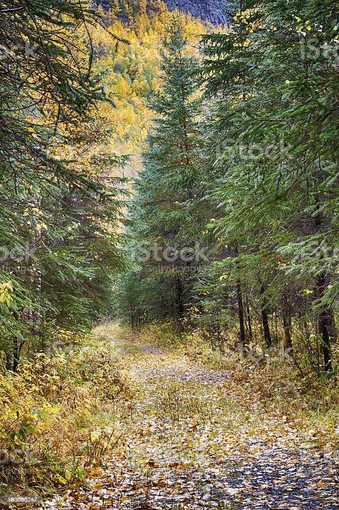 Leaf covered trail leading into autumns colors Alaska stock photo