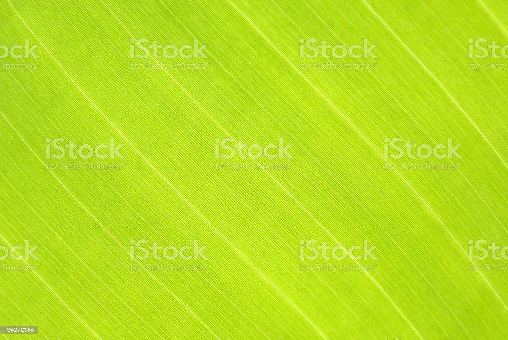 leaf detail royalty-free stock photo