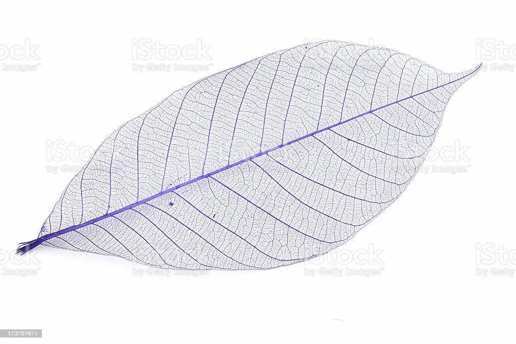 Leaf - Detailed royalty-free stock photo