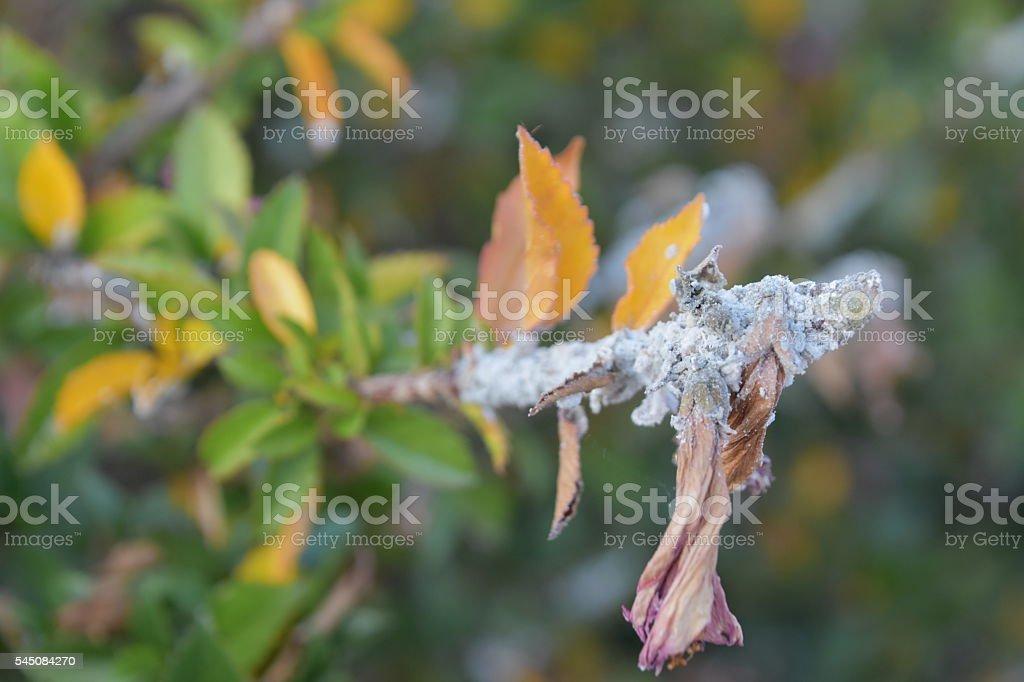 Leaf disease stock photo