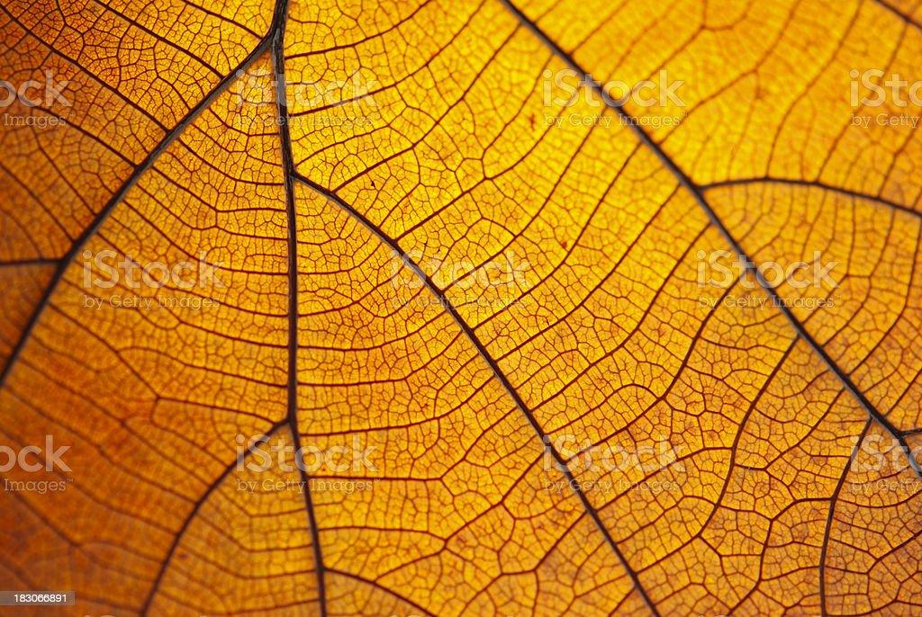 Leaf dry. royalty-free stock photo