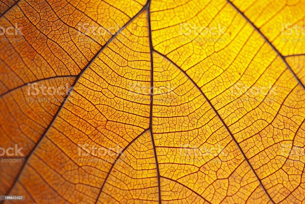 Leaf dry. royalty-free stock photo