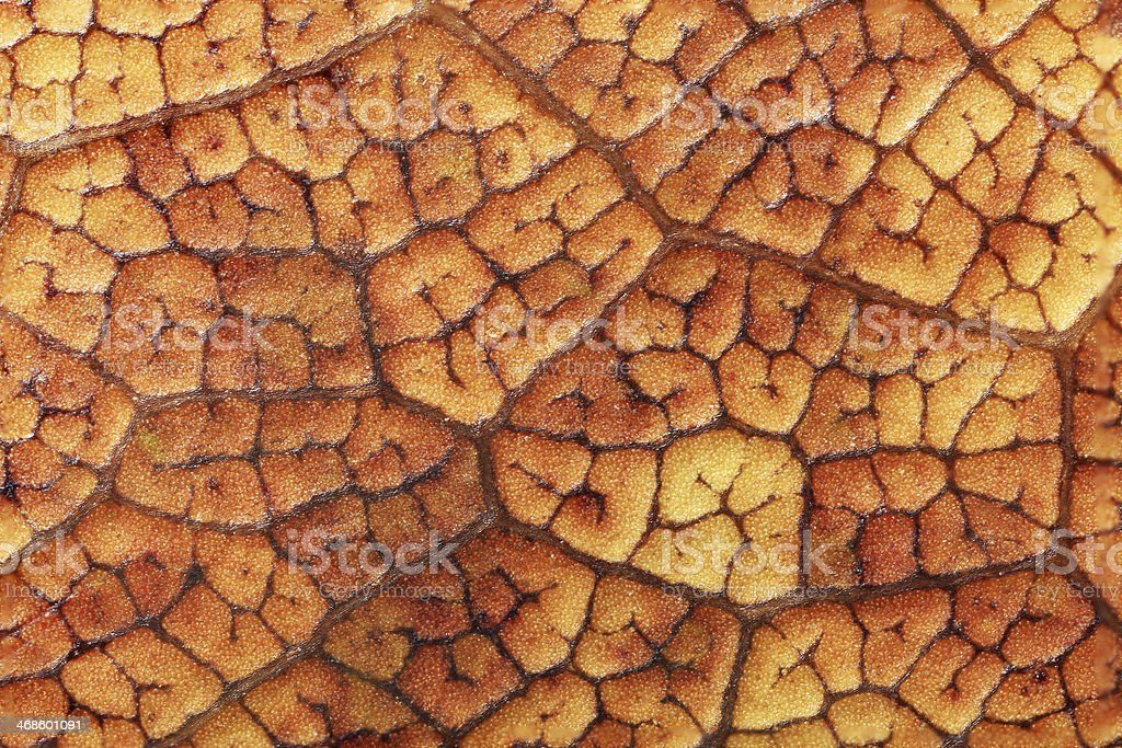 Leaf dry royalty-free stock photo
