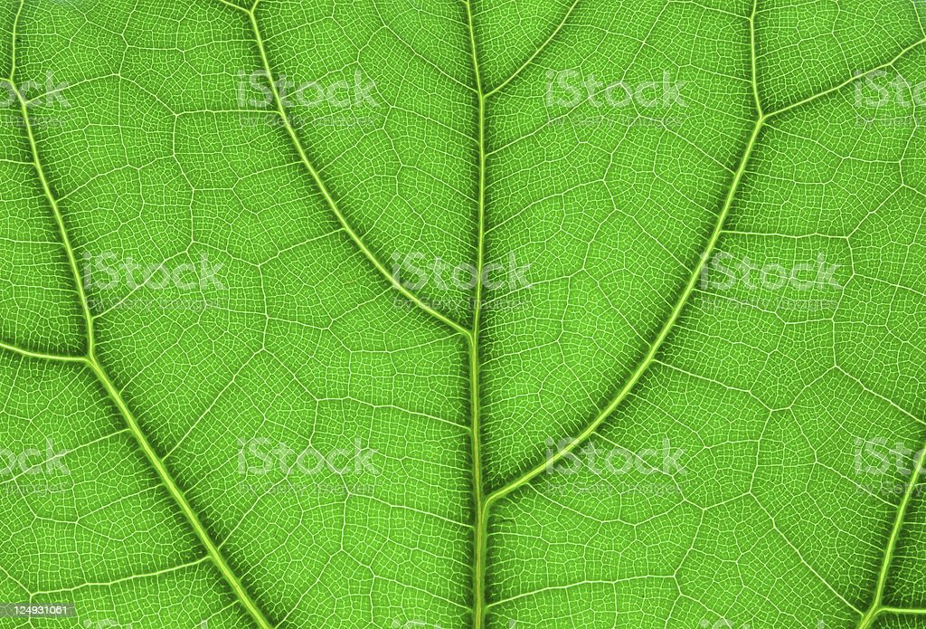 leaf extreme close up stock photo