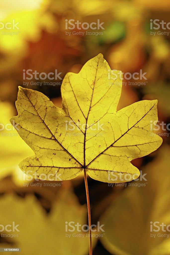 Foglia di autunno centrato foto stock royalty-free