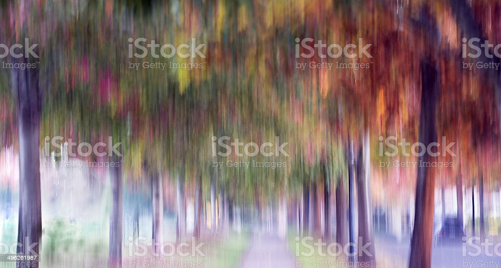 Leaf fall stock photo