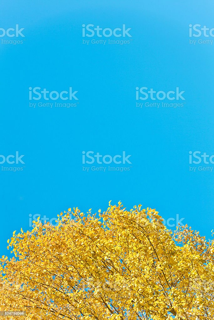 leaf for backgrounds royalty-free stock photo