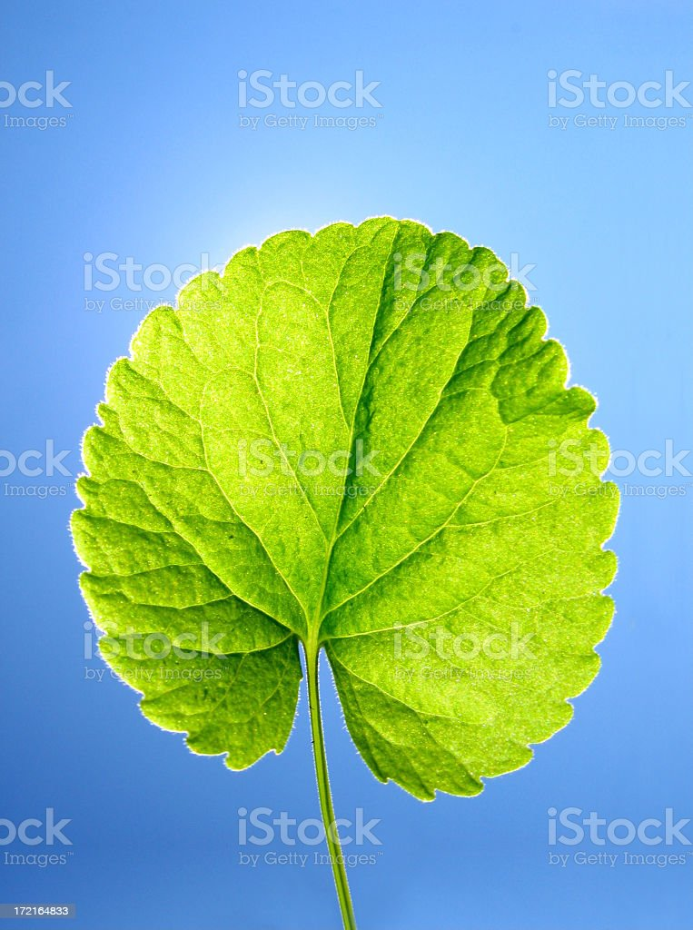 Leaf Fresh stock photo