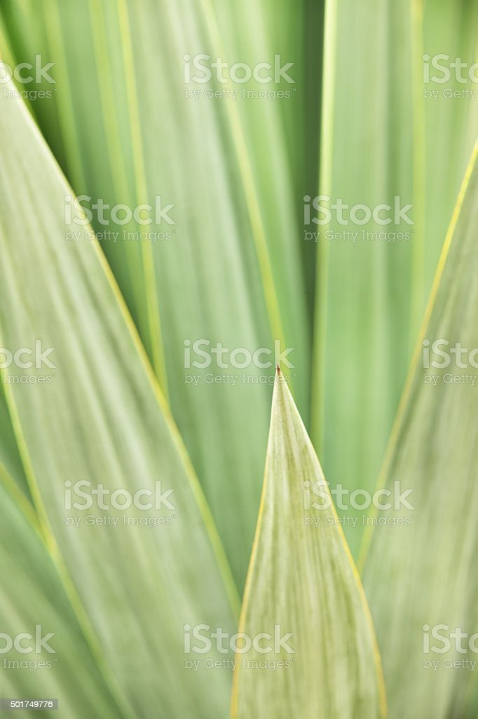 Leaf Frond Agave Plant stock photo