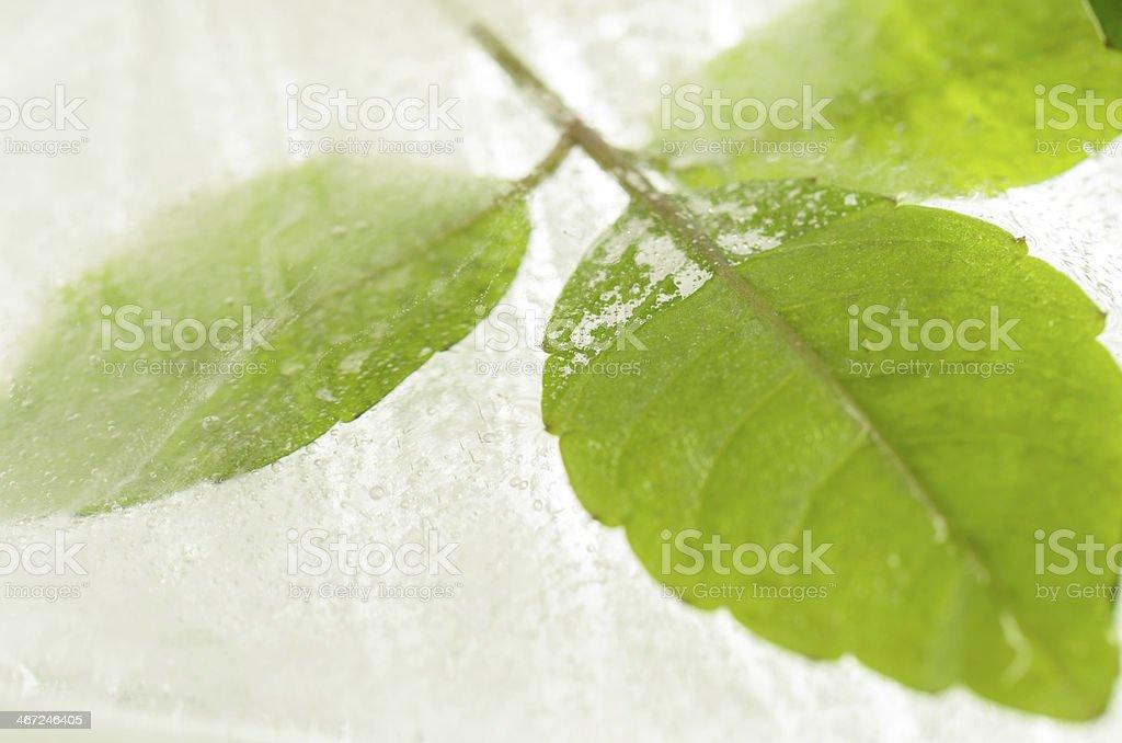 Leaf frozen in ice stock photo