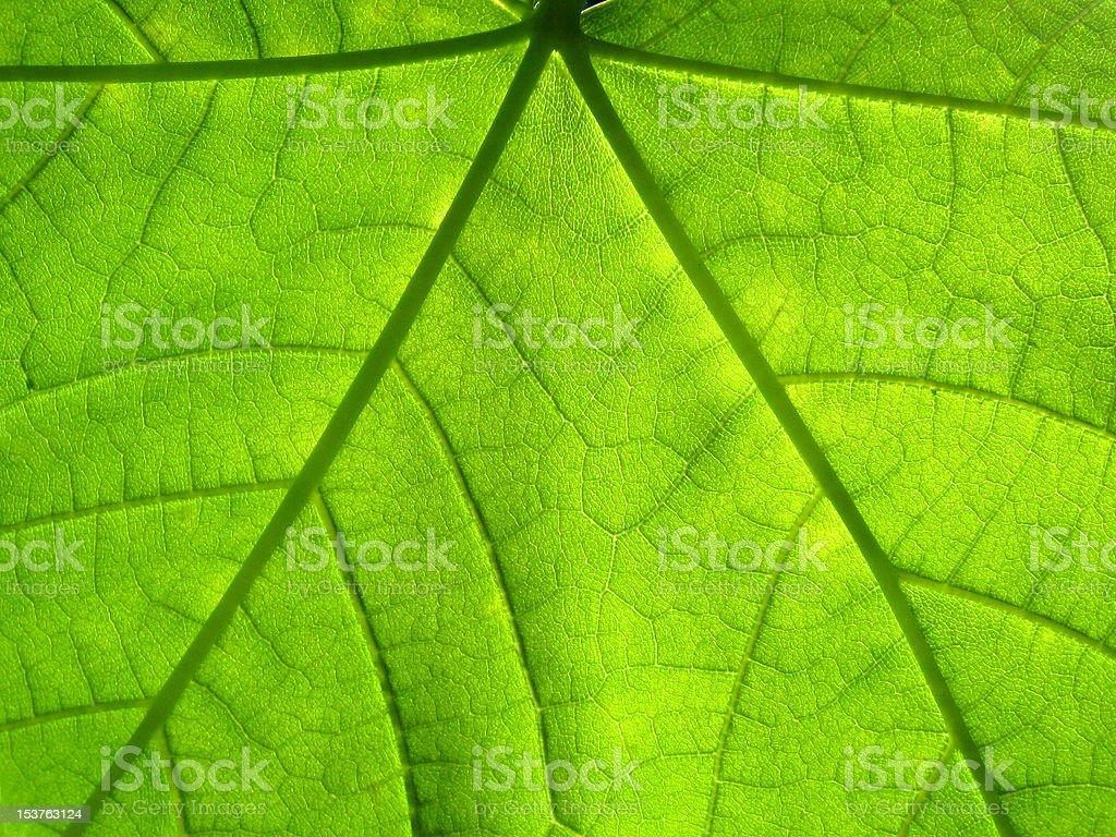 leaf green stock photo