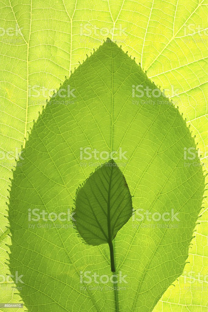 Leaf growth pattern royalty-free stock photo