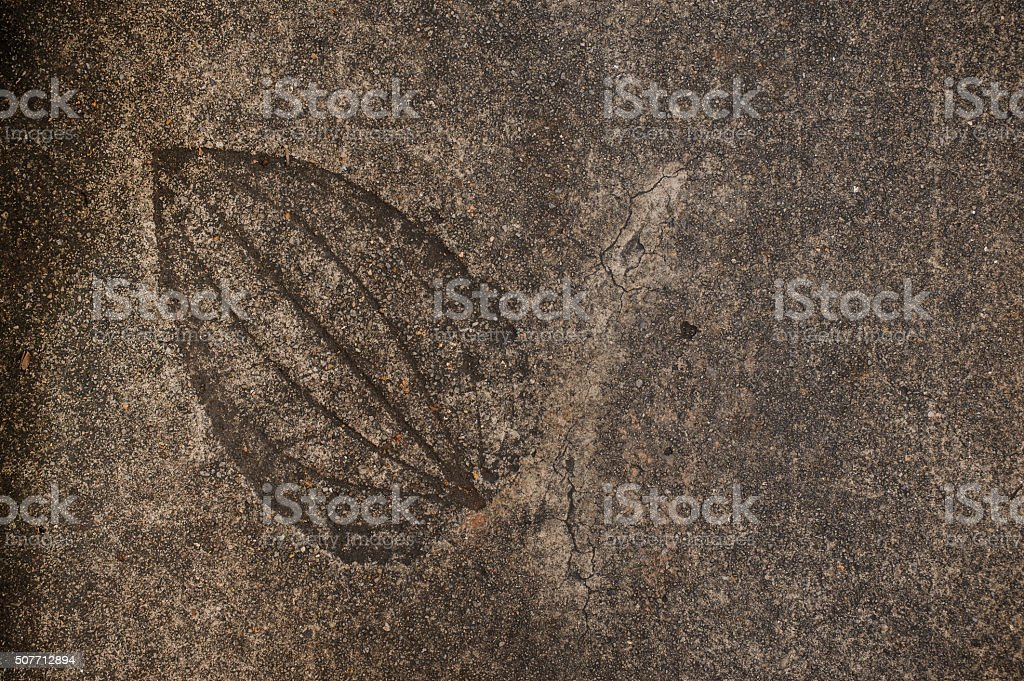 Leaf imprint on cement texture background stock photo