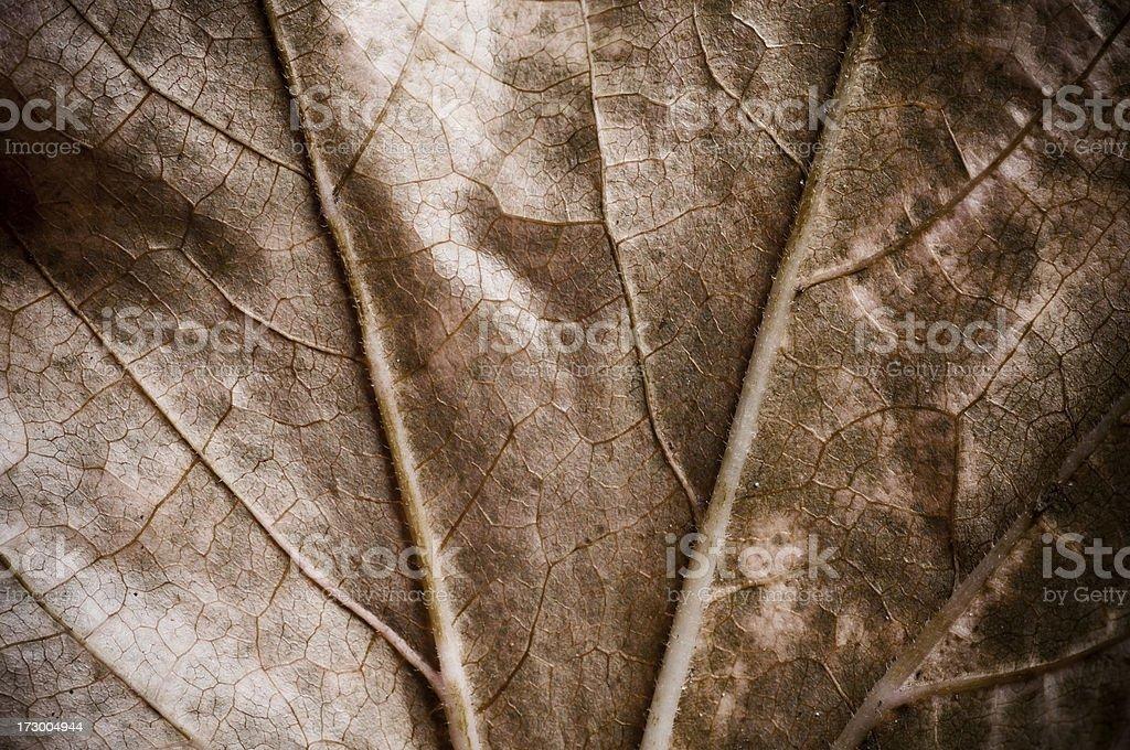 Leaf in autmn stock photo