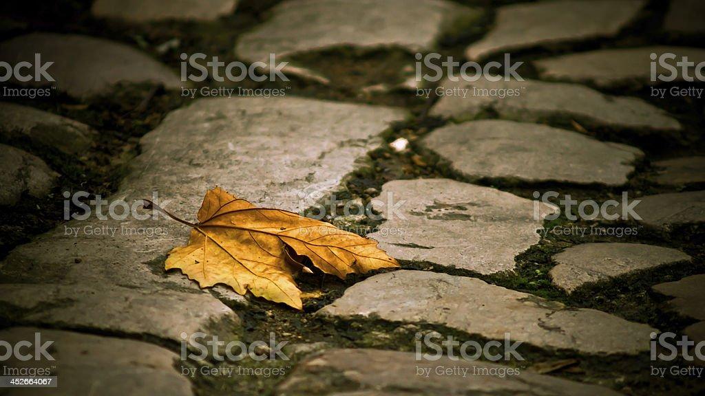 Leaf in autumn stock photo