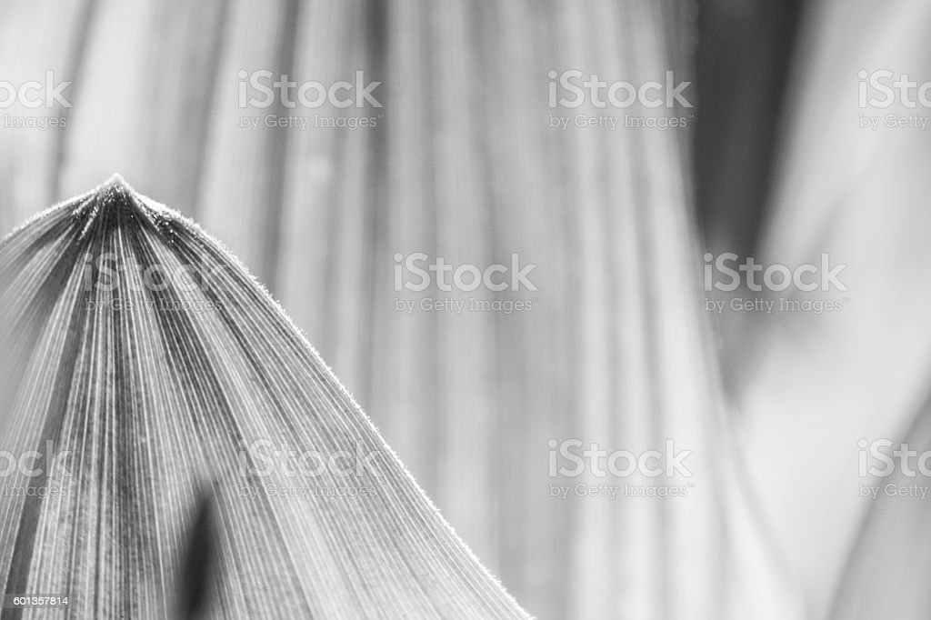 Leaf in Black and White stock photo