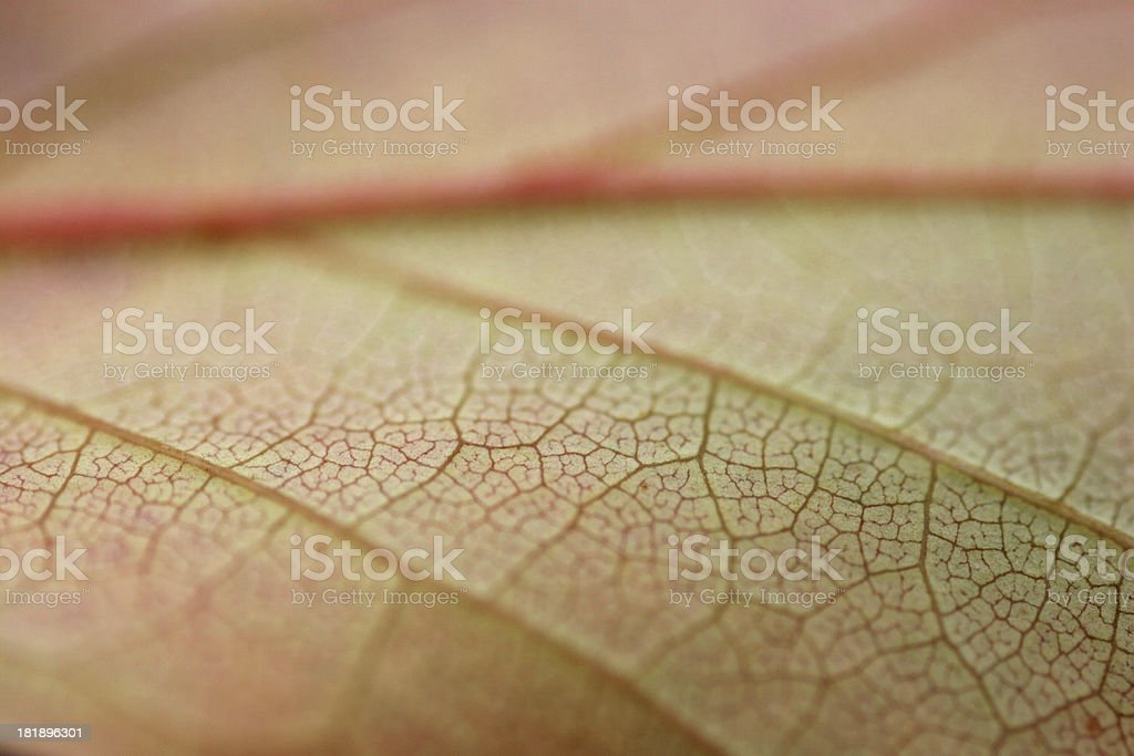leaf in macro royalty-free stock photo