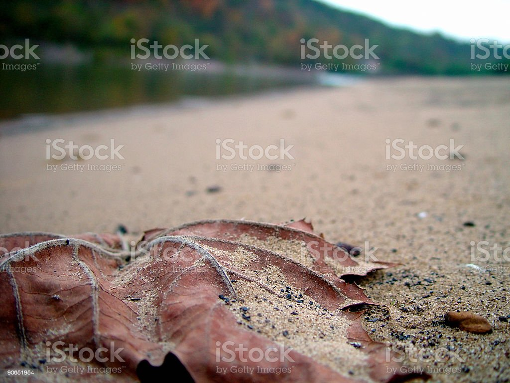 Leaf in Sand royalty-free stock photo