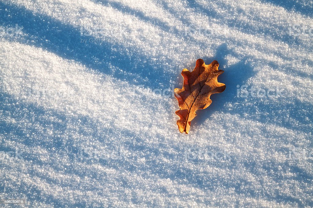 Leaf in the snow stock photo