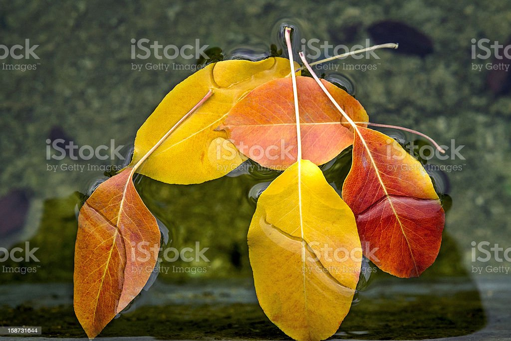 leaf in water royalty-free stock photo