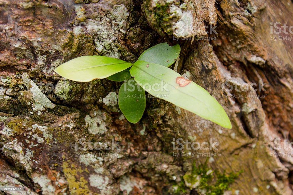 leaf into bark stock photo
