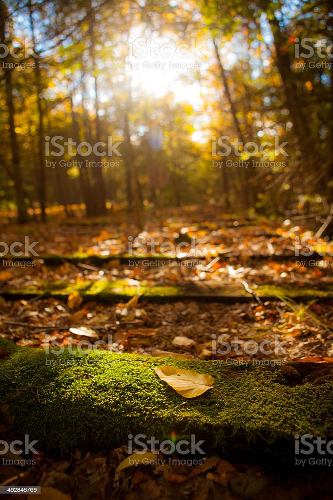 Leaf laying on an old abandoned railroad ties. stock photo