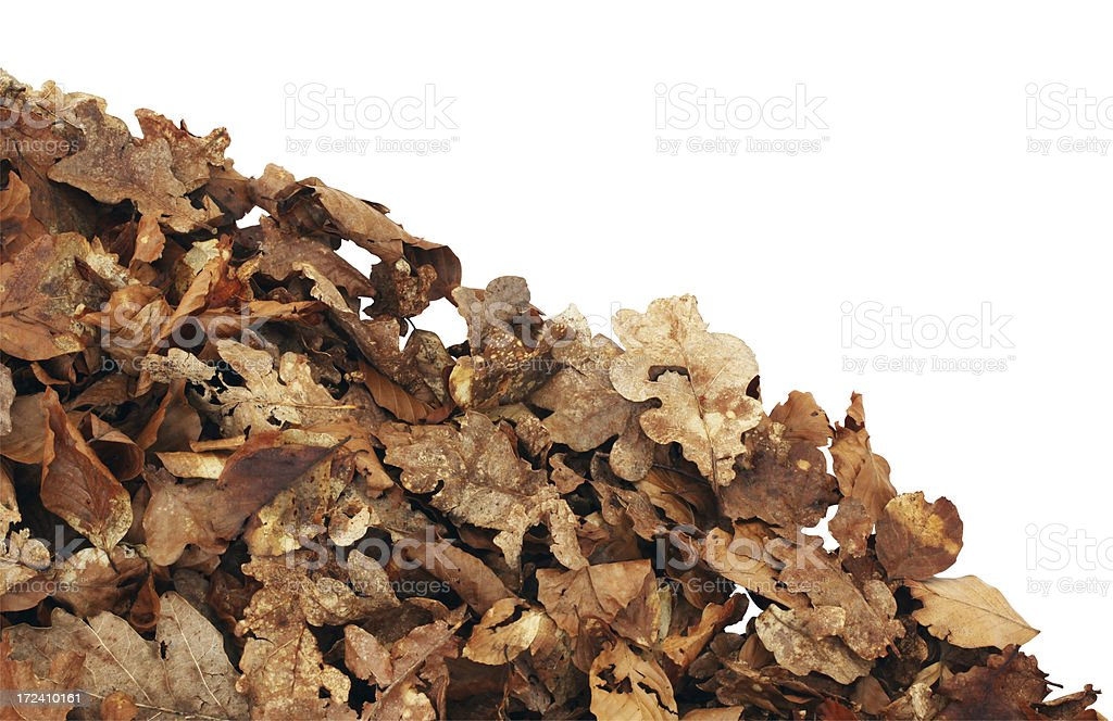 Leaf Litter Corner Isolated royalty-free stock photo