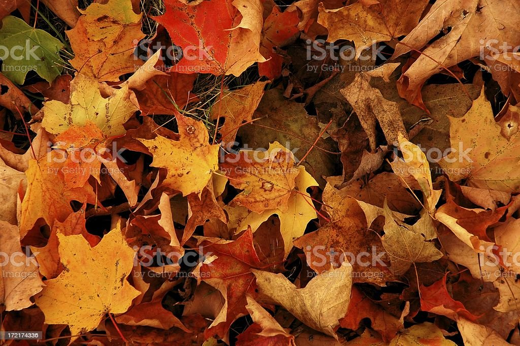Leaf litter royalty-free stock photo