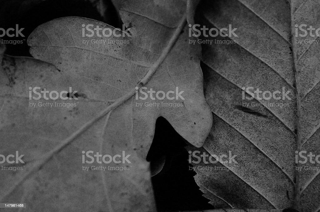 Leaf love royalty-free stock photo