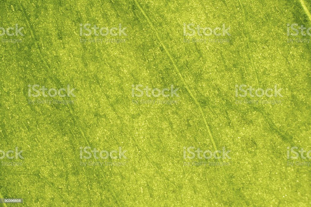 Leaf Macro royalty-free stock photo