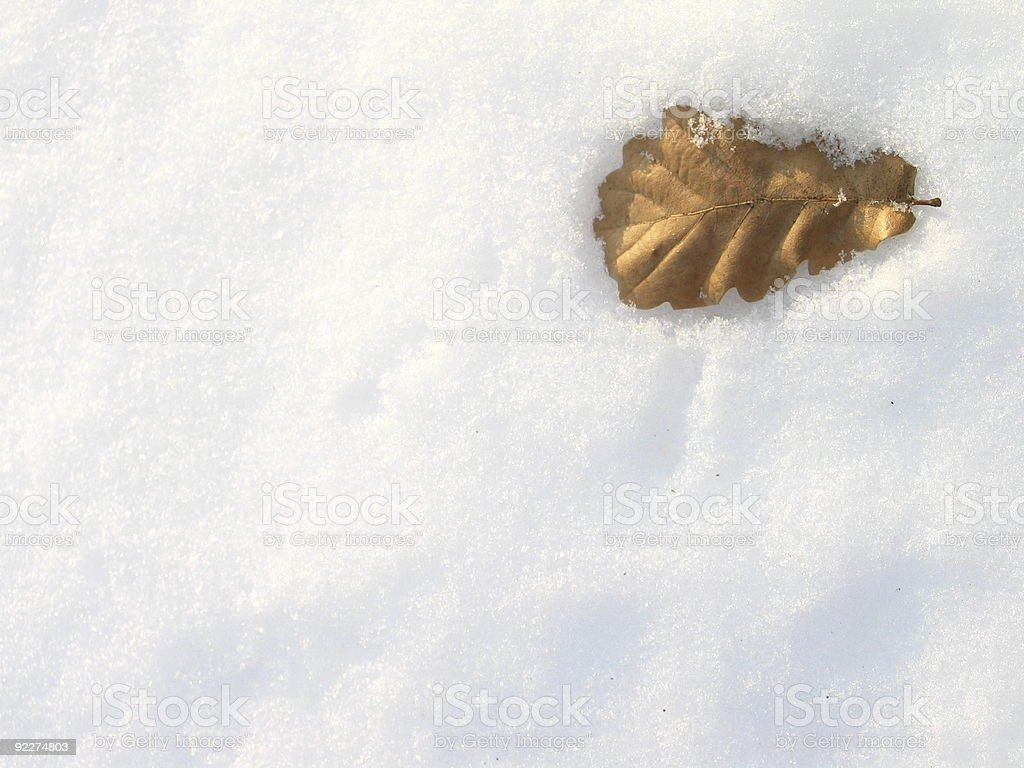 Leaf Me Alone royalty-free stock photo