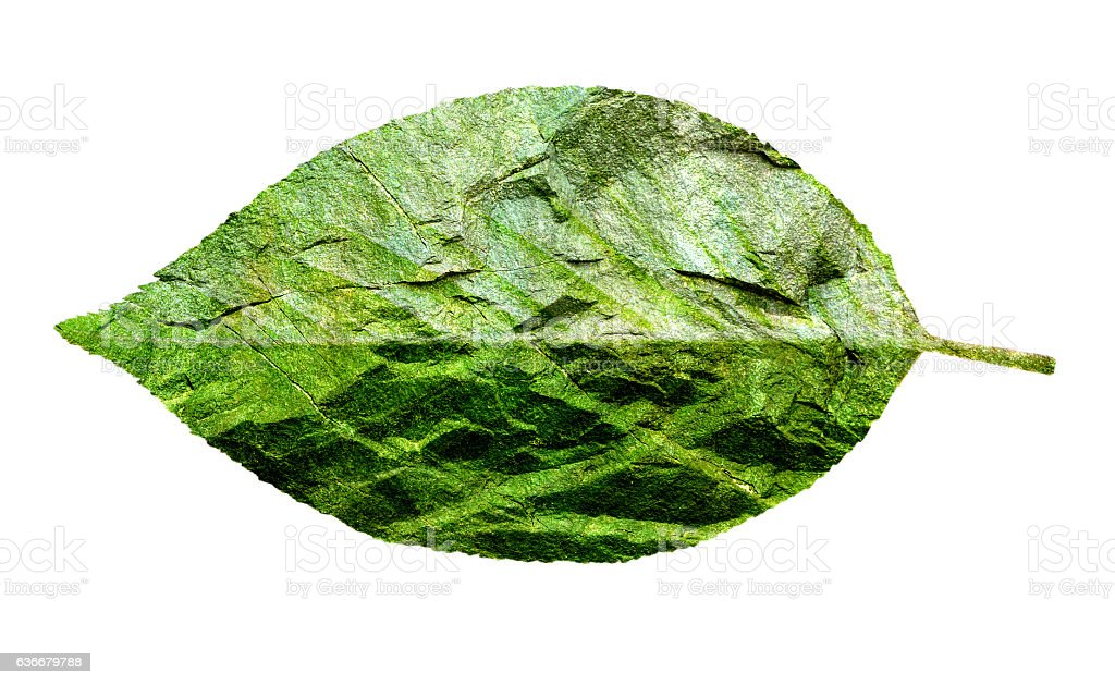 Leaf of cherry blossom double exposure on rock texture isolated stock photo
