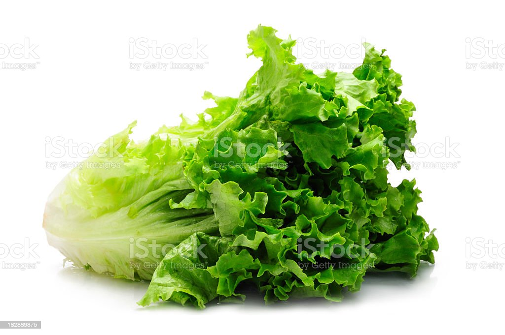 Leaf of green Romaine lettuce with white background stock photo