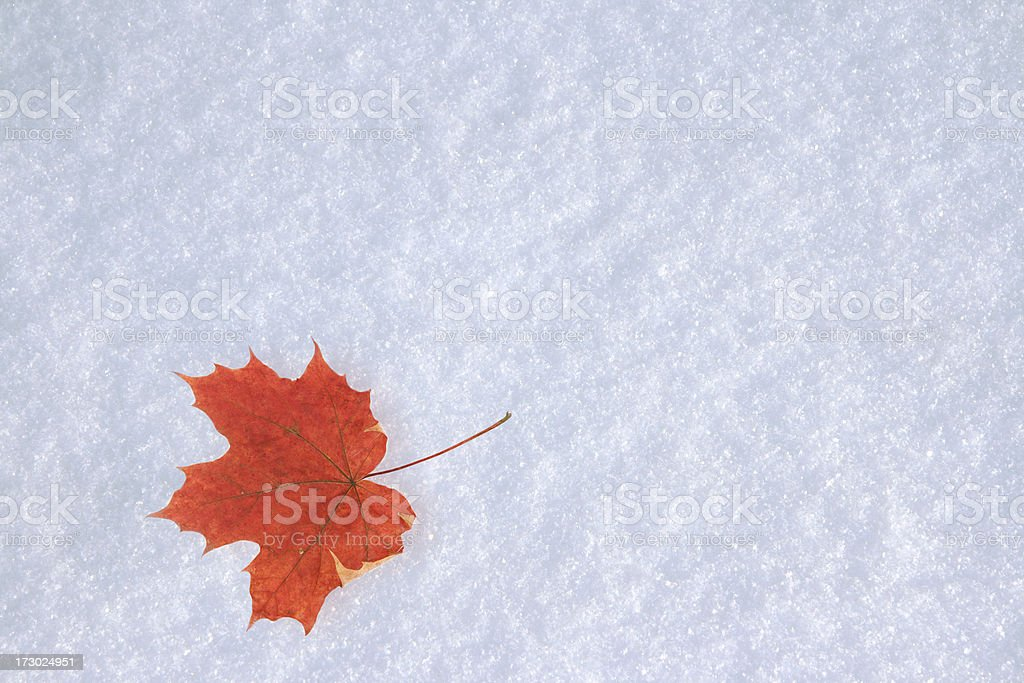 Leaf of  maple on  snow royalty-free stock photo
