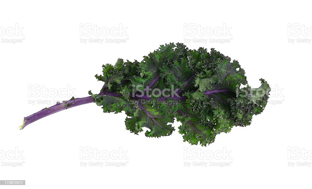 leaf of red kale stock photo