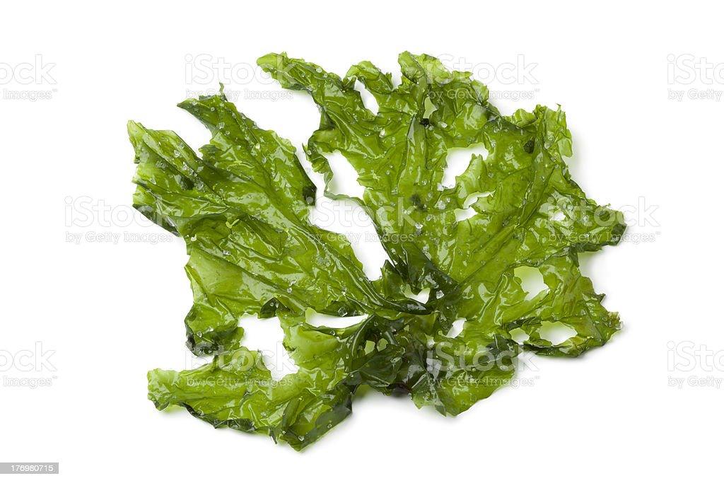 Leaf of Sea lettuce stock photo