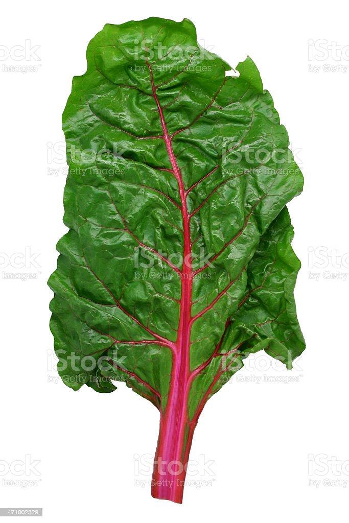 leaf of Swiss chard stock photo