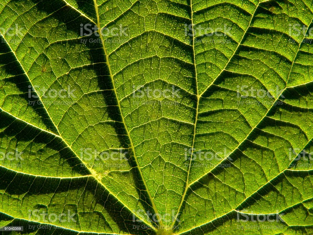 Leaf of the nettle royalty-free stock photo