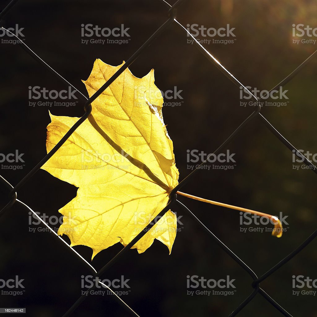 Leaf on a garden fence. royalty-free stock photo