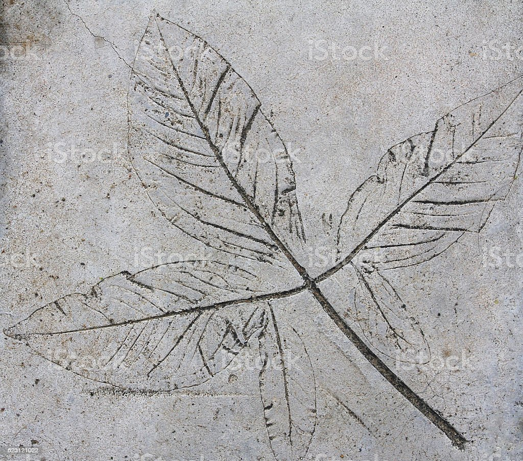 Leaf on cement texture background stock photo