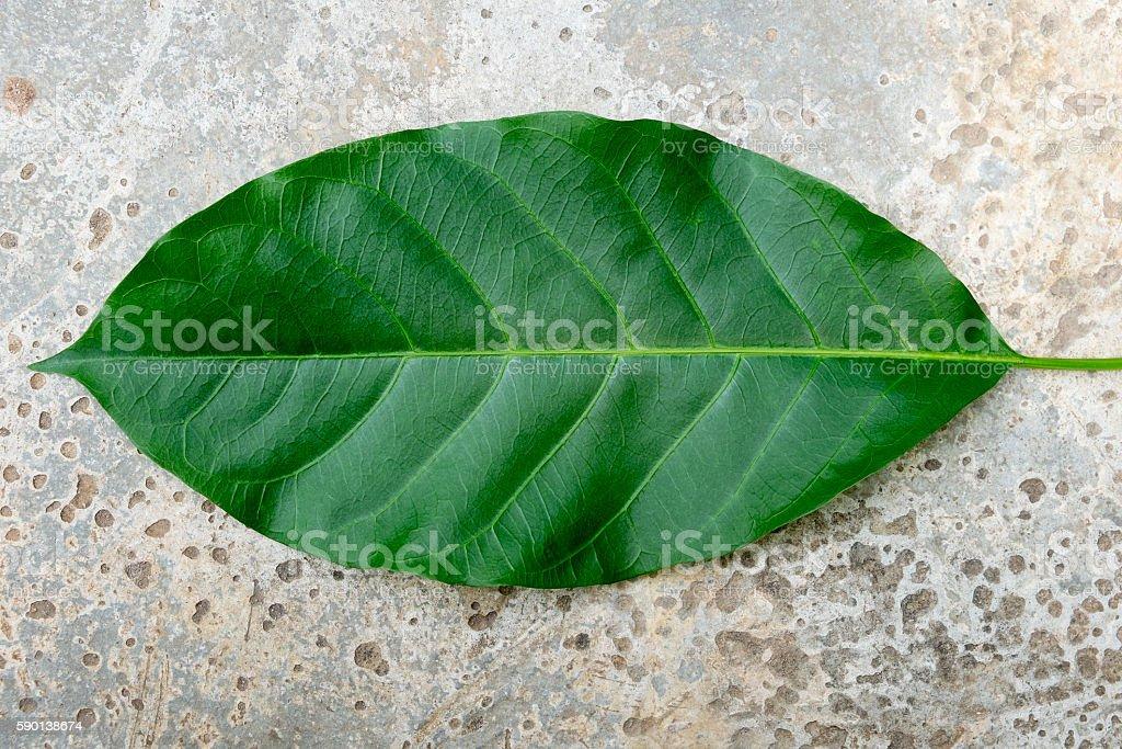 leaf on concrete background Lizenzfreies stock-foto