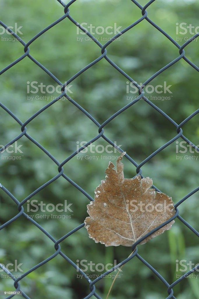 Leaf on Fence stock photo