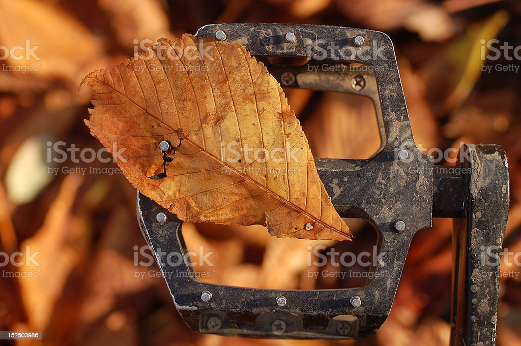Leaf on the pedal stock photo