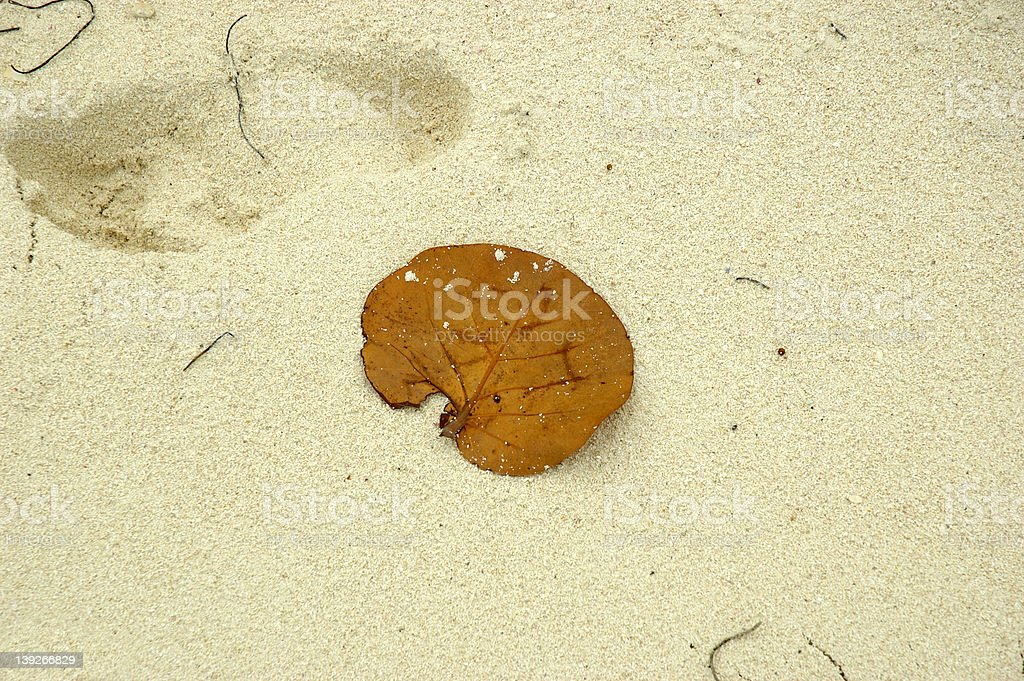 Leaf on the sand stock photo