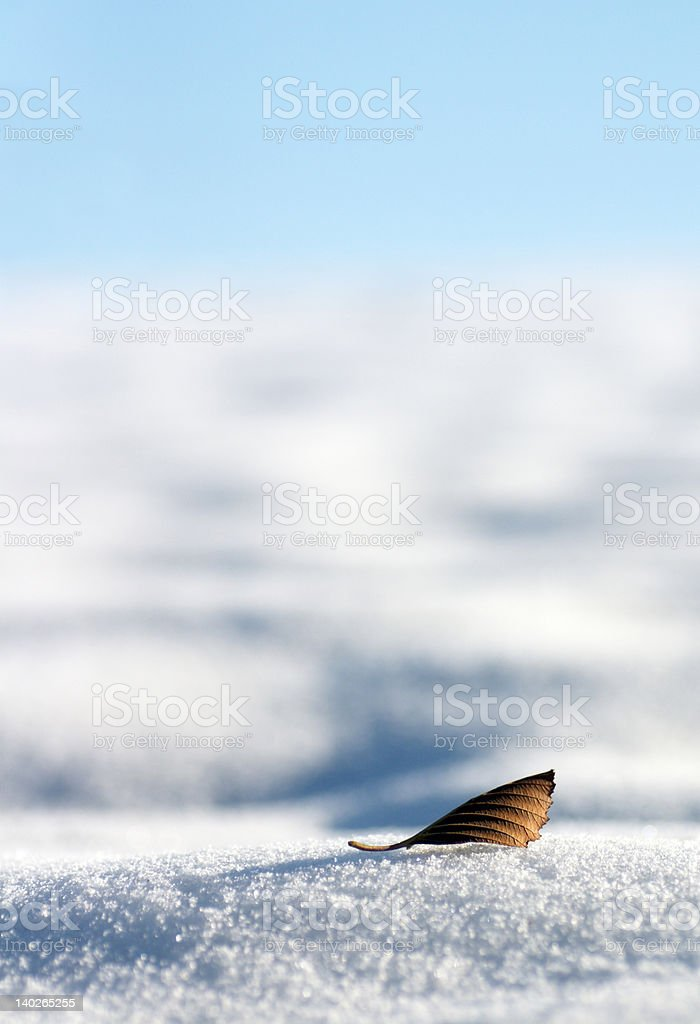 Leaf on the snow royalty-free stock photo