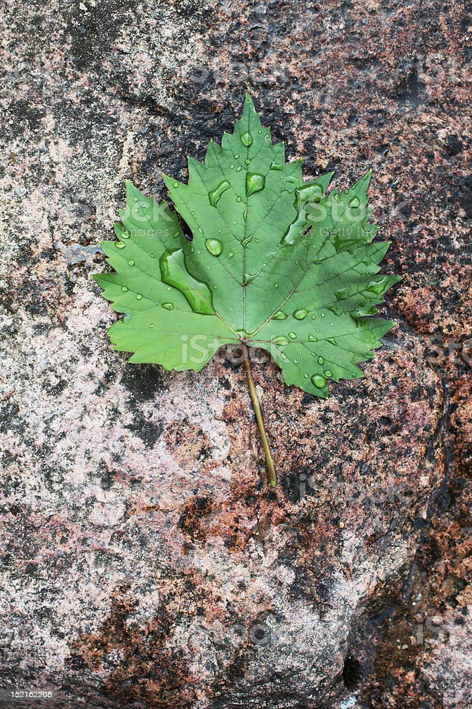 leaf on the stone royalty-free stock photo