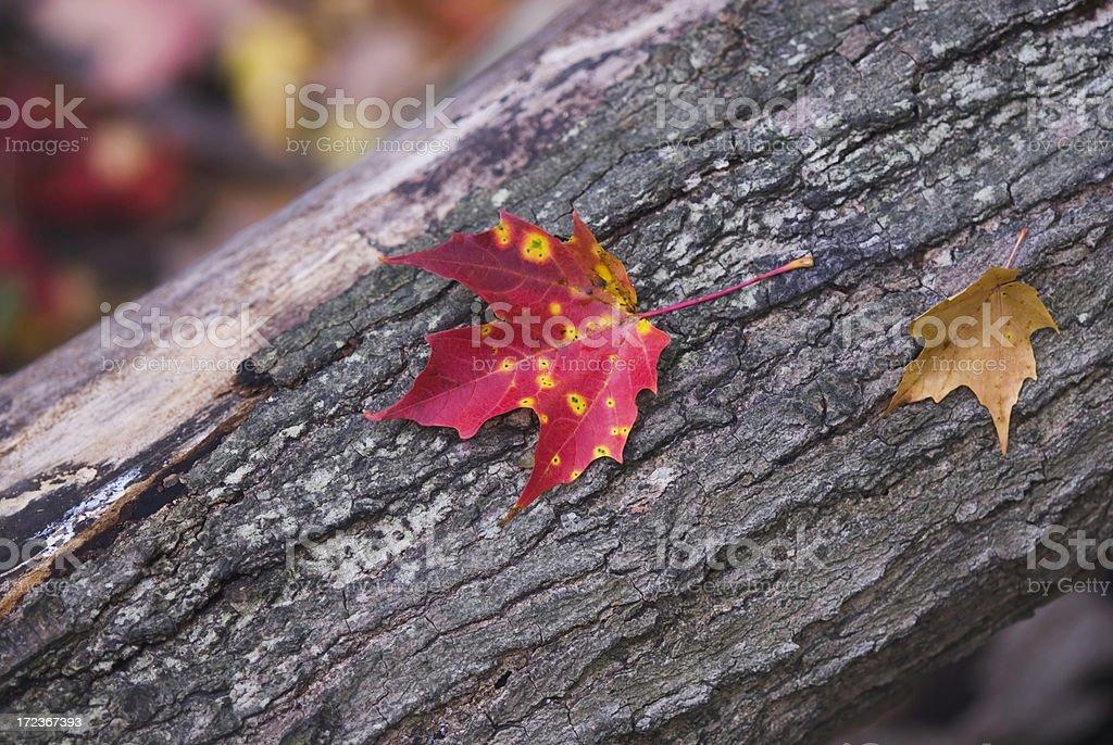 Leaf on the tree bark stock photo