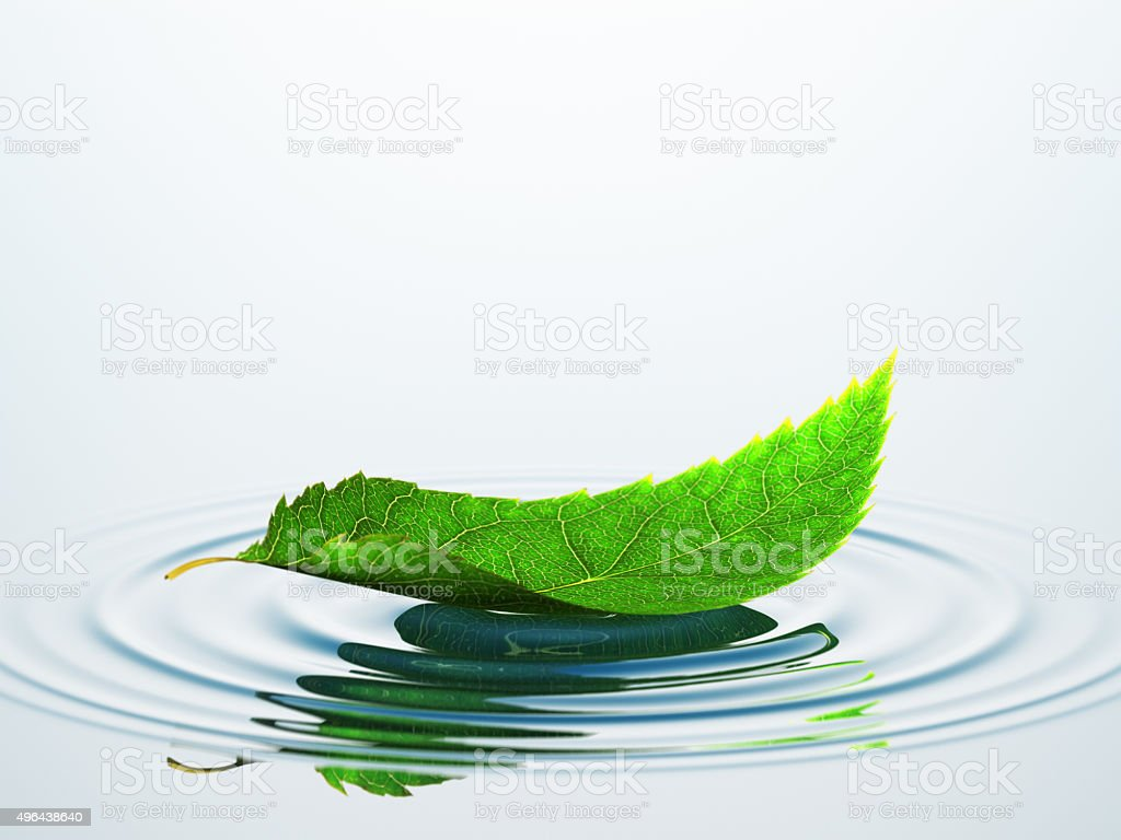 Leaf On The Water stock photo